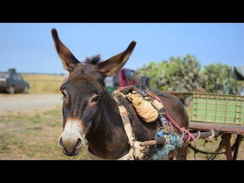 Animal Week Morocco (2017)