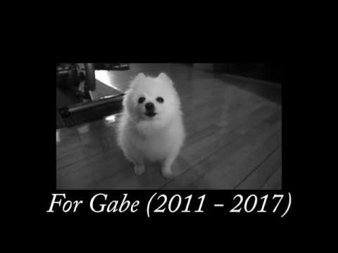 Download Gabe the Dog - Hurt (Tribute to Gabe the Dog)