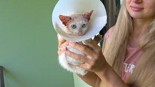 Спасаем котёнка. Лечение животных на Пхукете 2019.