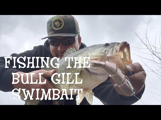 Fishing Triton Mike Buccas Bull Gill Swimbait Catching Largemouth Bass