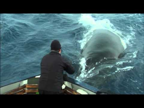 Hugh's Fish Fight   Save Our Seas   Channel 4