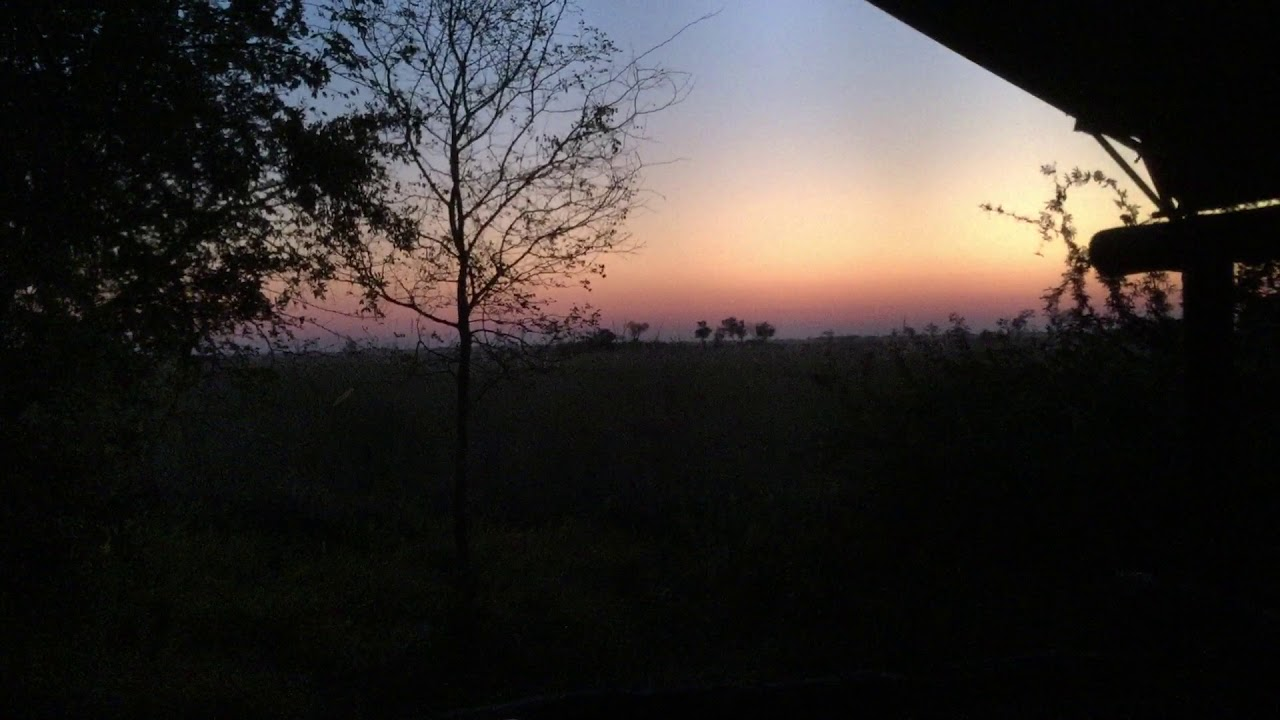 African Bird Sounds at Night, Camp Xakanaxa, Botswana ...