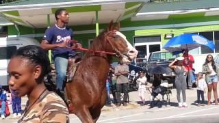 Horses in the Pine Tree Festival Parade 10/29/2016