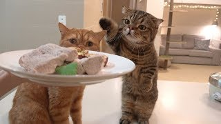 Special dinner with the cats: Pork neck steak. (ENG SUB)