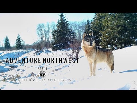 1.6 | Alberta Wolf Hunt 2020 | Part 2