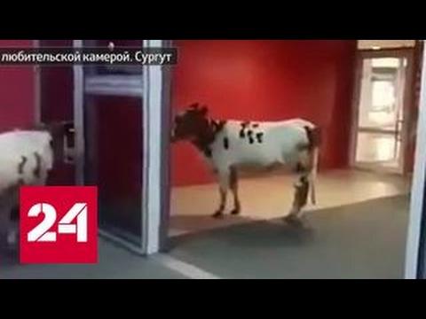Знакомства в Сургута без регистрации