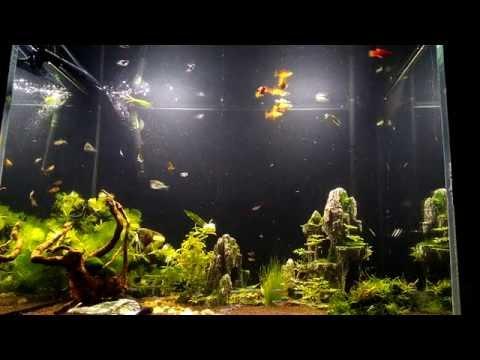 i love aquarium tanks !!!!
