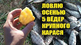 Лови рыбу всю осень с этой секретной насадкой для рыбалки! Вот на что клюёт рыба осенью!