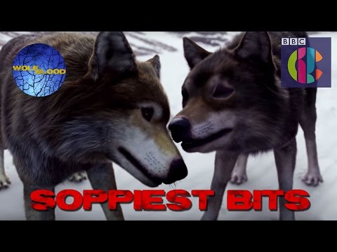 Wolfblood's Soppiest Moments!