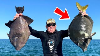 MASSIVE Triggerfish and *Mystery Fish* Catch Clean and Cook BlueGabe Style in MEXICO!