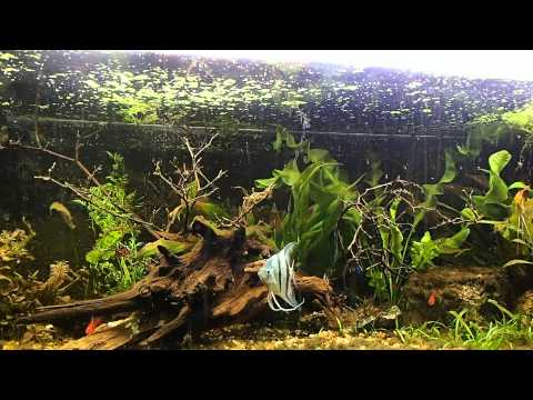 how to put driftwood in aquarium 1