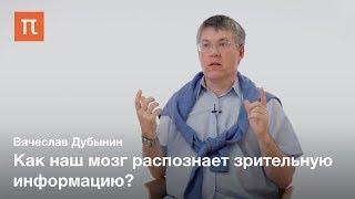 Зрительные центры головного мозга — Вячеслав Дубынин
