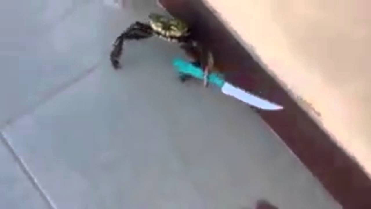 crab knife fight remix youtube