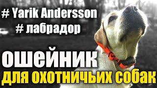 #Собака для охоты.Яркие оранжевые ошейники из биотана для собак.