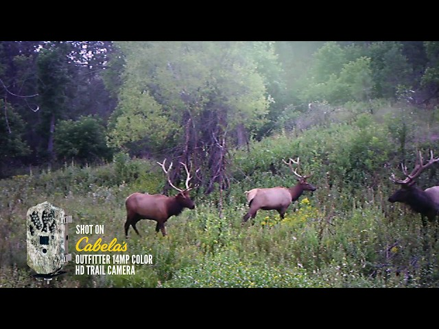 Actual Wild Game Footage | Outfitter 14mp Trail Camera