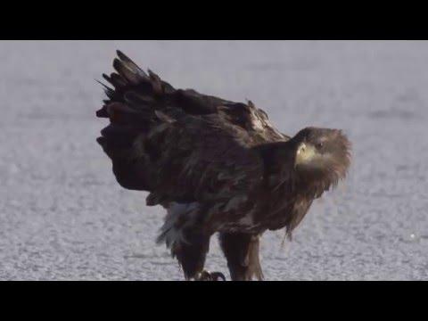 Vad Kunság - A Puszta rejtett élete (6) - Március 24-től a mozikban! letöltés