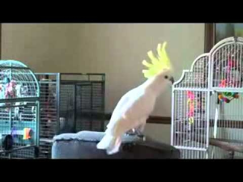 Tribute To Michael Jackson by Parrot
