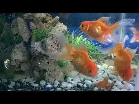 Beautiful aquariums. Bể cá cảnh đẹp.