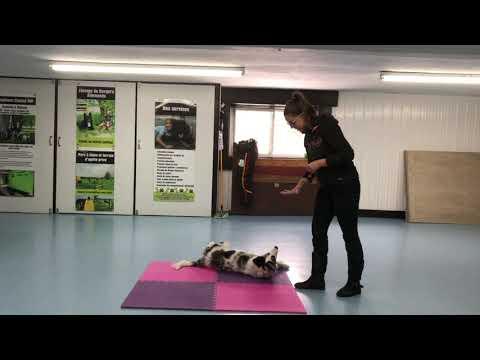 Advanced Tricks Dog Kiss   DMWYD