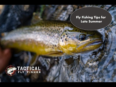 Fly Fishing Tips For Late Summer