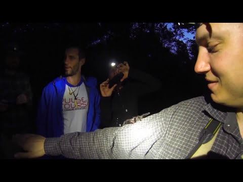 Strange Stick Bug And venomous Tarantula Spider