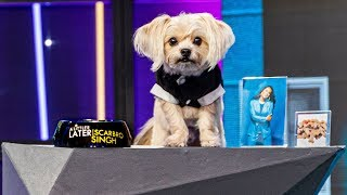 My Dog Got His Own Talk Show