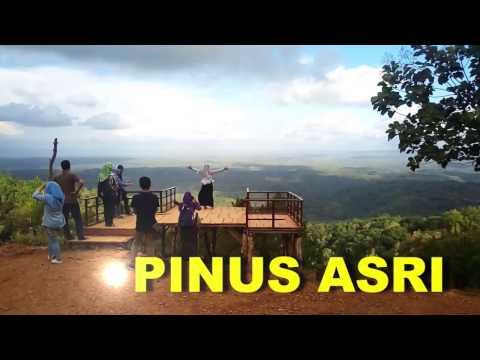 rekomendasi-wisata-jogja-alam-sejuk-hutan-pinus-asri-bantul-terbaik