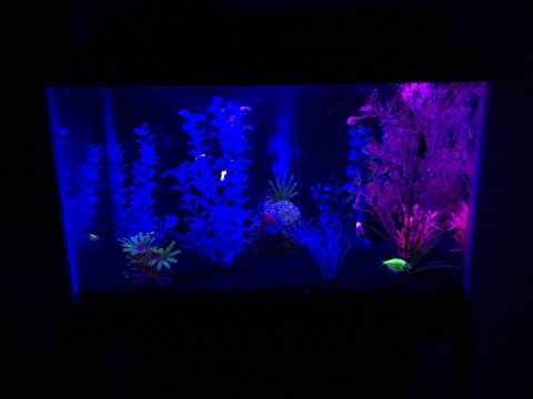 How To Make A GloFish Aquarium