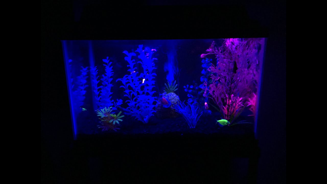 How to make a glofish aquarium youtube for Black light for fish tank