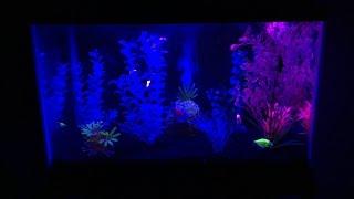 How to Make a GloFish Aquarium