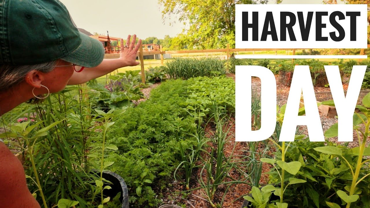 High Yield Pruning Results & Full Harvest | June Garden Update