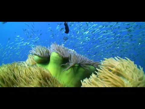 Open Water Diver - Débutant