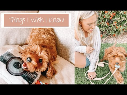 Things I Wish I Knew Before Getting A Puppy | Archie The Cavapoo