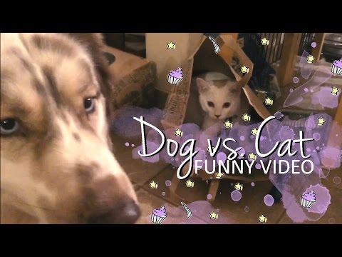 Funny Dog vs. Cat Clips