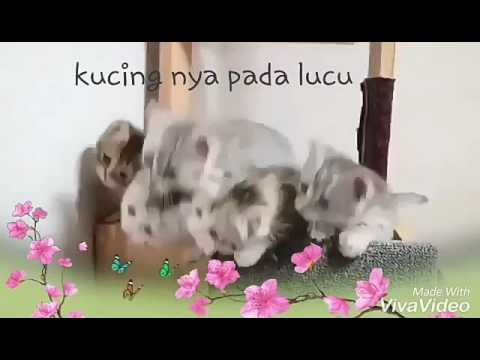 Video kucing lucu' nang ning ning nang eeee!!!! Hahahah