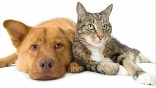 Muzyka na relaks i sen swoje zwierzęta - psy i koty