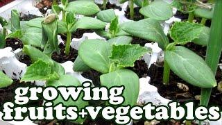 Growing Fruits And Vegetables Garden Update - Green Vegetable Seeds - Container Gardening - Jazevox