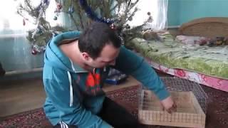 Как сделать клетку для Морской Свинки своими руками!