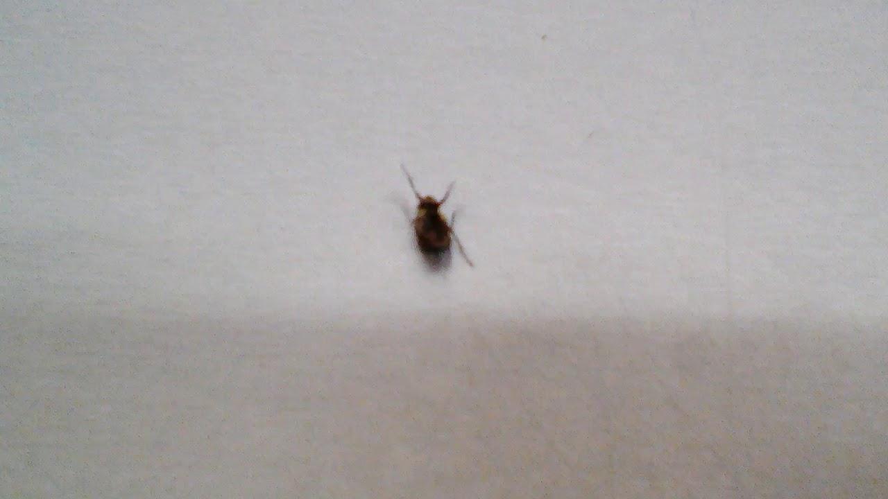самую поздравления муха в супермаркетах лежали маленькой