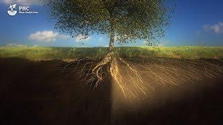 PHC Película: El suelo es un organismo viviente