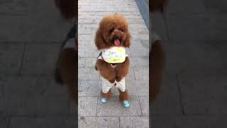 Look at these cute and funny puppies dogs 3191