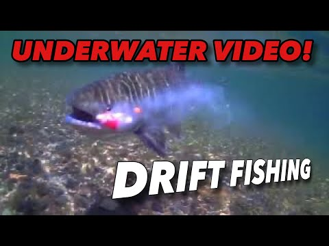 Underwater Salmon Bites: Drift Fishing With Eggs