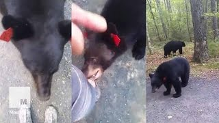 Hiker Has Extremely Close Encounter With 2 Black Bears | Mashable News