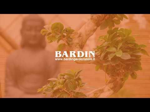 Mostra Dei Bonsai 2018 Bardin Garden Store Treviso Youtube