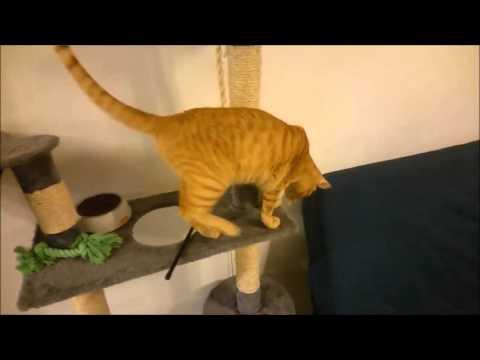 Jagd nach einer Maus