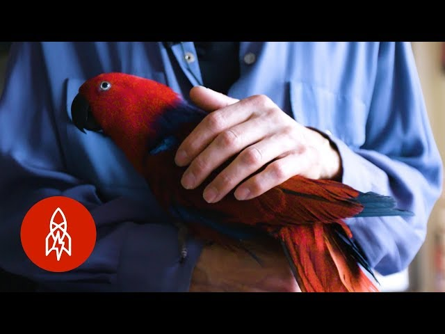 The Parrot Whisperer Can Fix Your Bird Woes