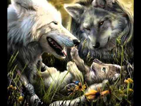 Enya - Crying Wolf - le chant du Loup.wmv