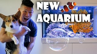 STARTING NEW SALTWATER REEF AQUARIUM | WHAT I LEARNED - Life After College: Ep. 458