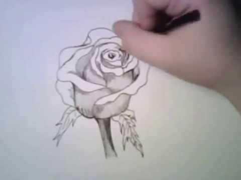 Como dibujar una rosa - YouTube