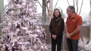 Al's Christmas Tree Trends